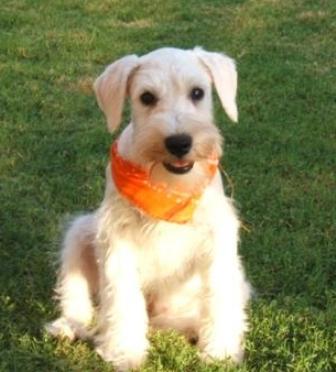 Animal House Adoptable Dogs Louisville