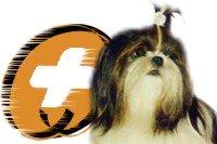 Hale Pet Door Shihtzu Rescue Organizations