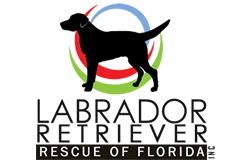Lab rescue fl