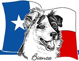 Border collie tx 2