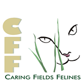 Caring fields