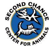 Second chance flag 2
