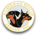 Doberman rescue league