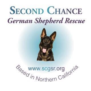 Rescue Me! - HeIpingAnimaIs in Need. German Shepherd