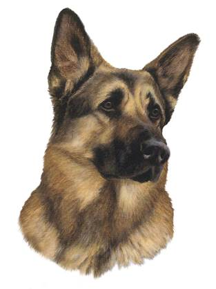 Southwest german shepherd rescue
