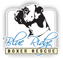Blue ridge boxer