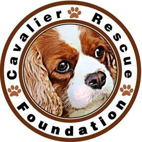 Cavalier rescue foundation