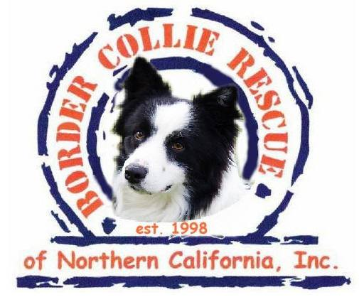 Border collie rescue of n ca