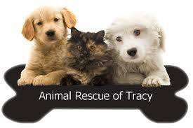 Animal rescue tracy