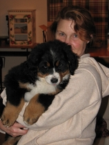 Gretta, a Bernese Mountain Dog at 3 months